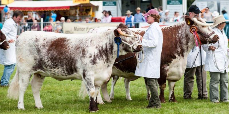 The Rutland Agricultural Society Trustees & Show Committee